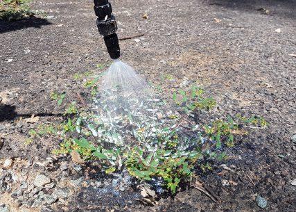 Spraying with BioWeed