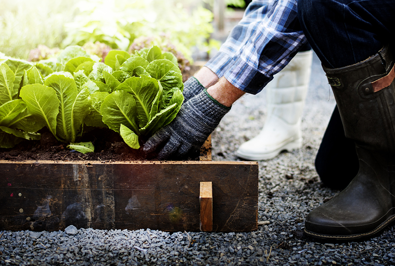 6-Summer-Vegetables-To-Plant-In-Your-Garden