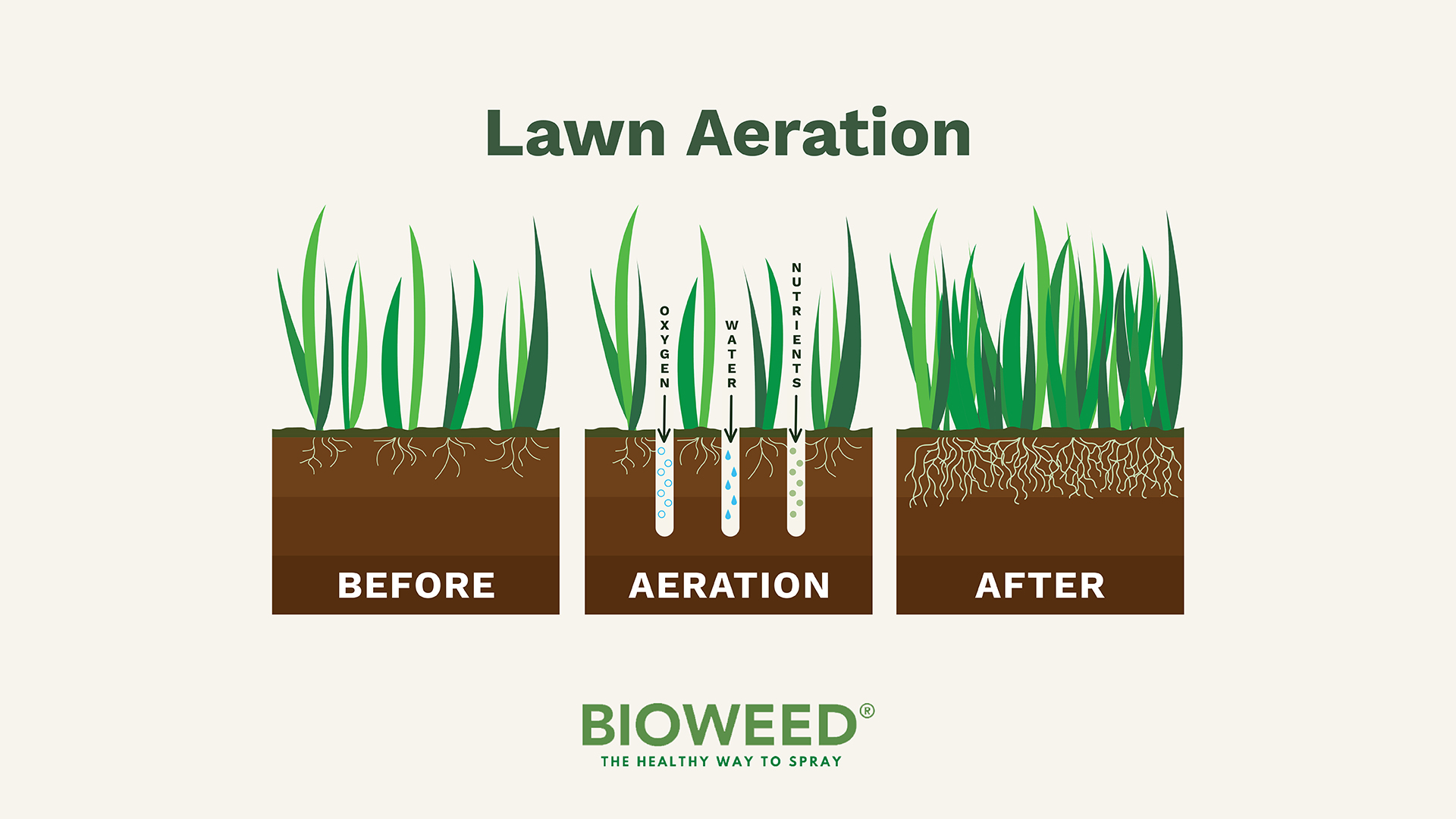 A-Crash-Course-On-Lawn-Aeration3