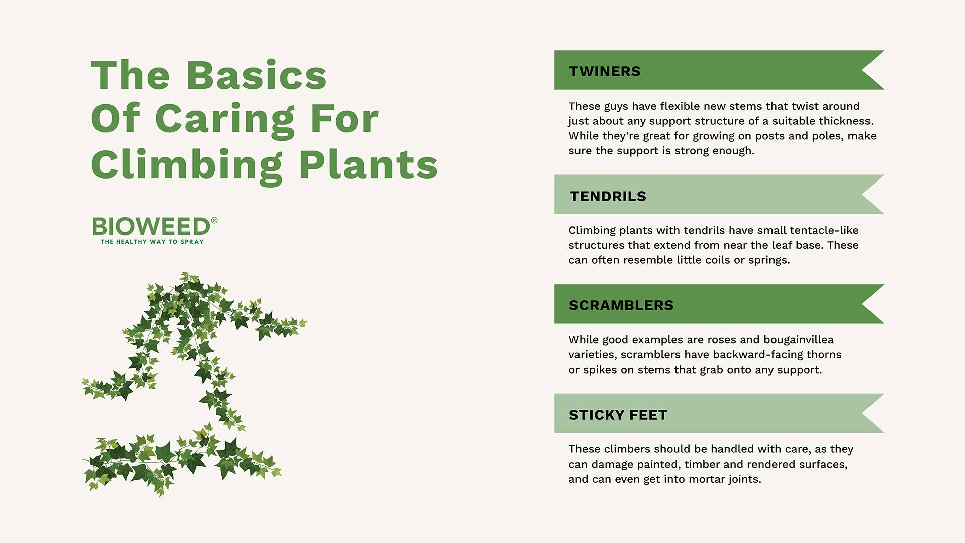 A-Guide-To-Mastering-Climbing-Plants3 (2)