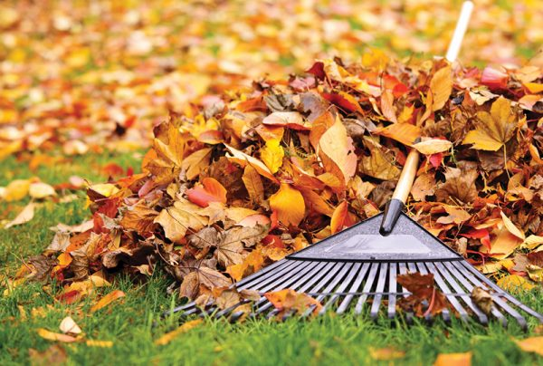 Autumn-Gardening-Tips-From-The-Professionals