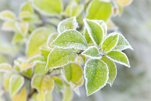 Controlling-weeds-in-winter-website