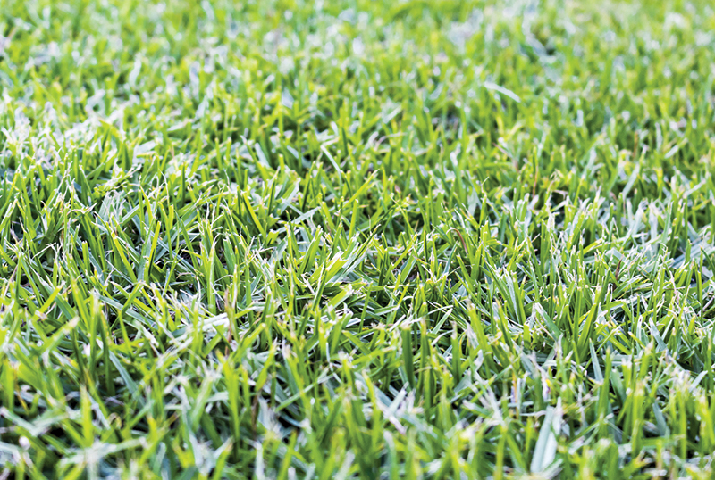 Couch=Grass-vs-Kikuyu-What's-The-Difference_