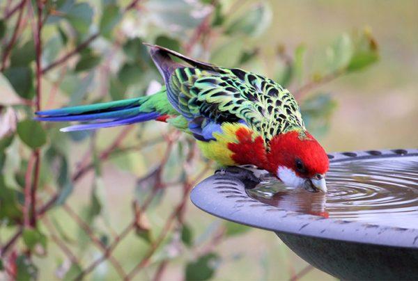DIY-Bird-Bath-Tips-For-Nature-Lovers (1)