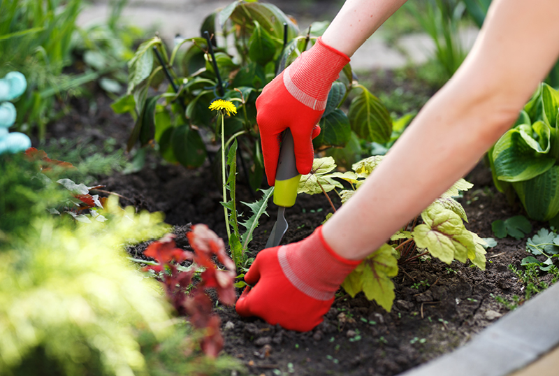 Five-Common-Weed-Control-Techniques