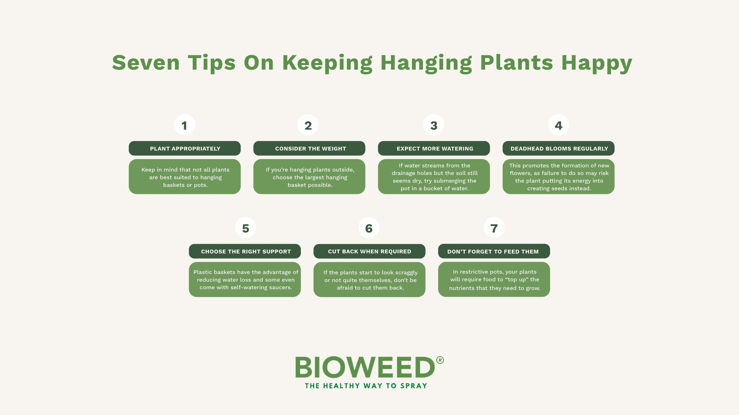 How-To-Care-For-Hanging-Plants3