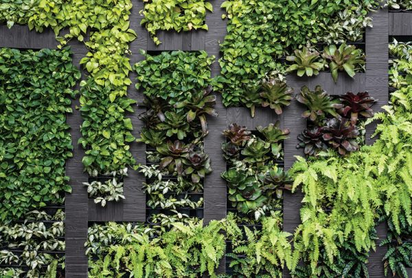 How-To-Make-Vertical-Gardens-For-Beginners