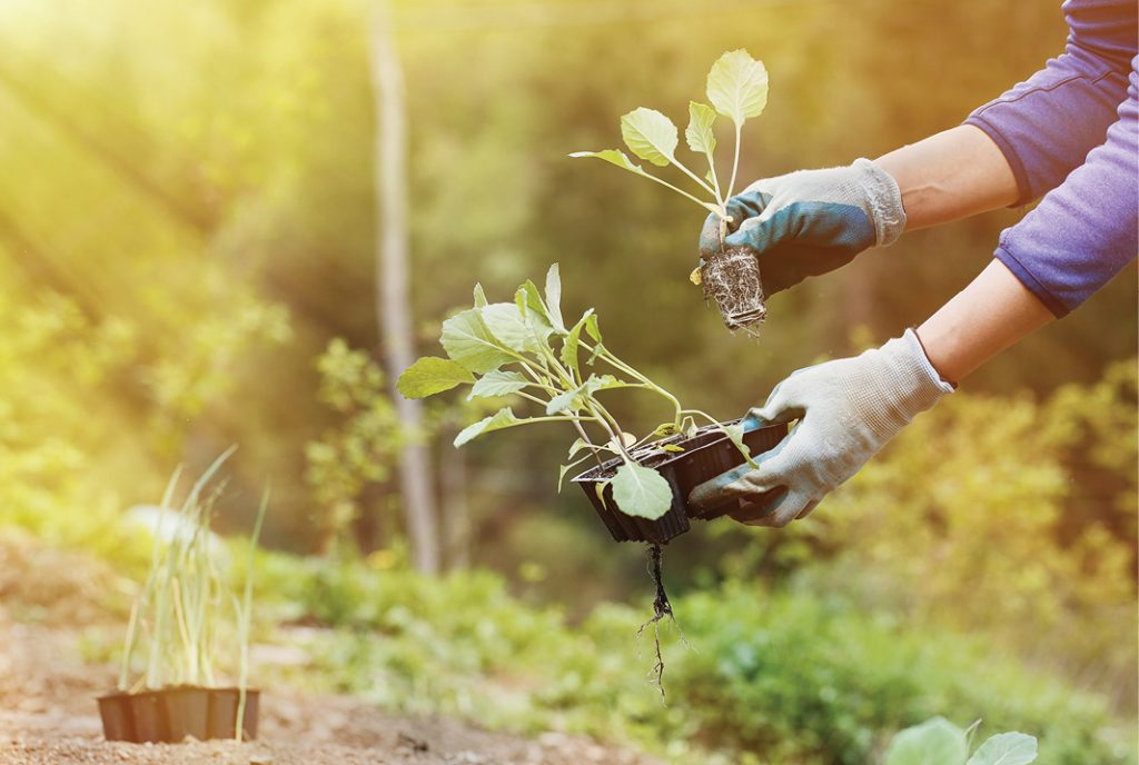 How-to-be-an-organic-gardener-at-home
