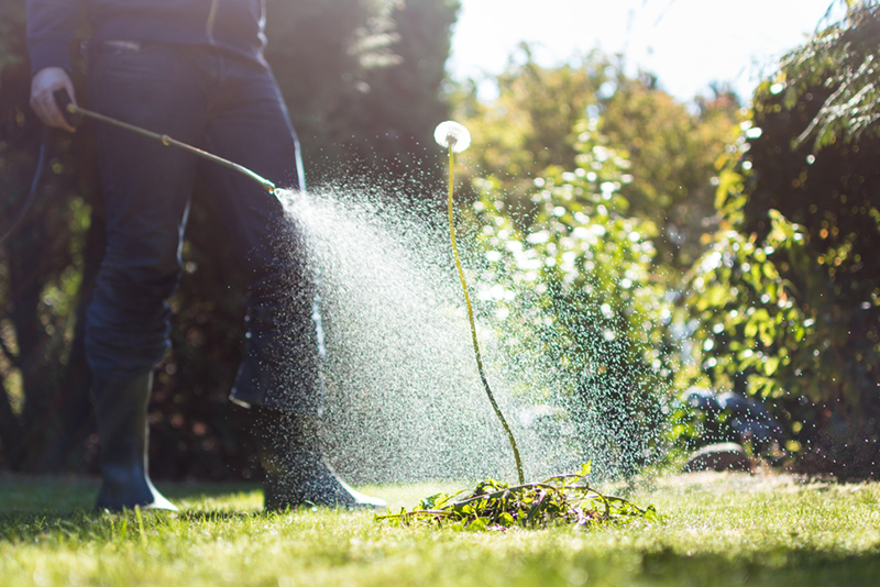 Lawn-tips-how-to-get-rid-of-weeds-in-lawn