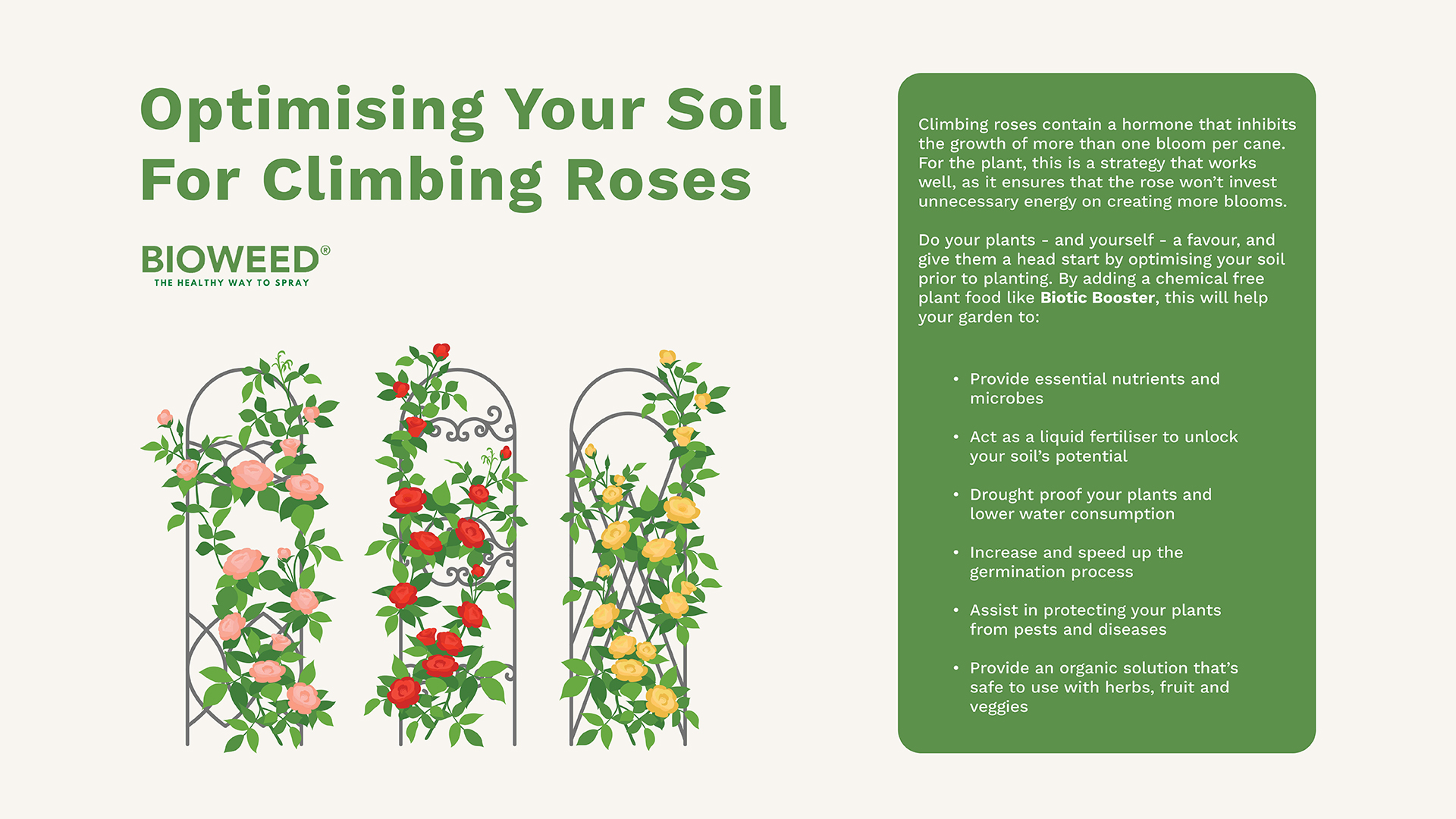 Mastering-The-Art-Of-Climbing-Roses3 (1)
