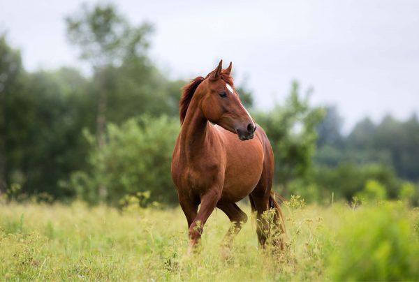 Navigating-Capeweed-And-Horses