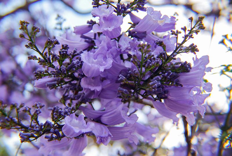Preparing-Your-Garden-For-Spring
