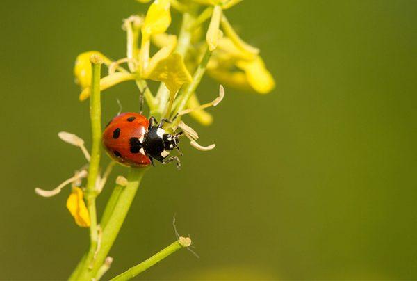 Protecting-The-Good-Garden-Bugs