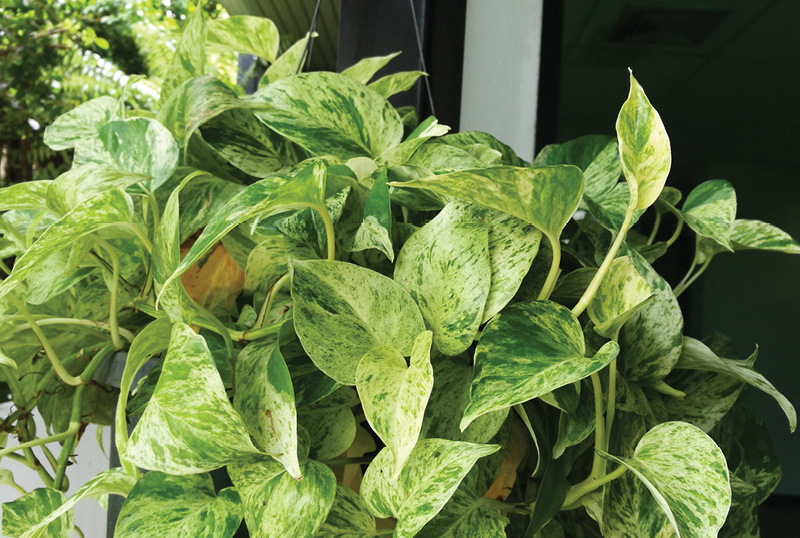 Seven-Best-Plants-For-The-Shade