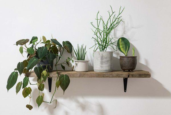 The-Best-Indoor-Plants-For-Beginners