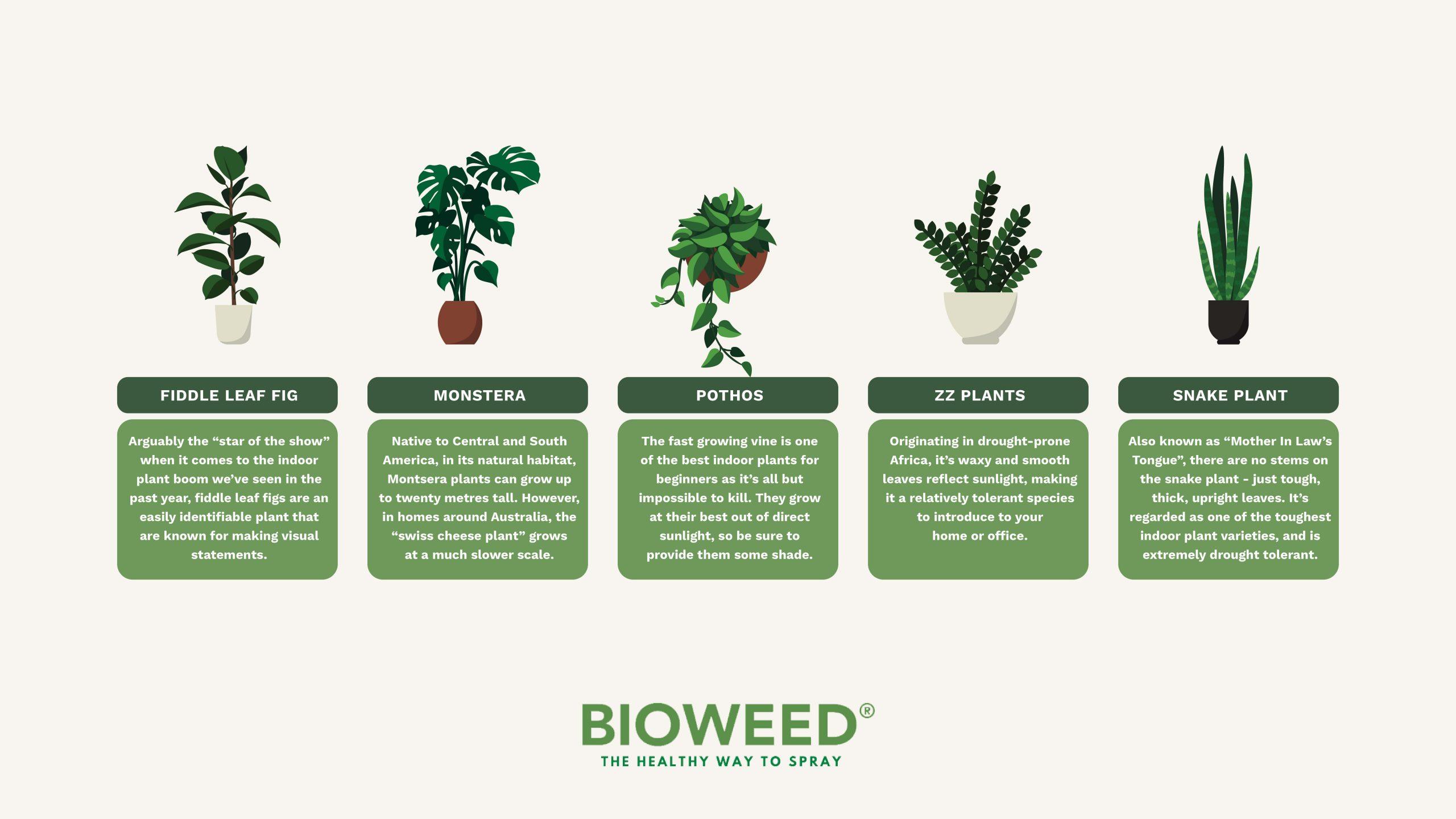 The-Best-Indoor-Plants-For-Beginners3
