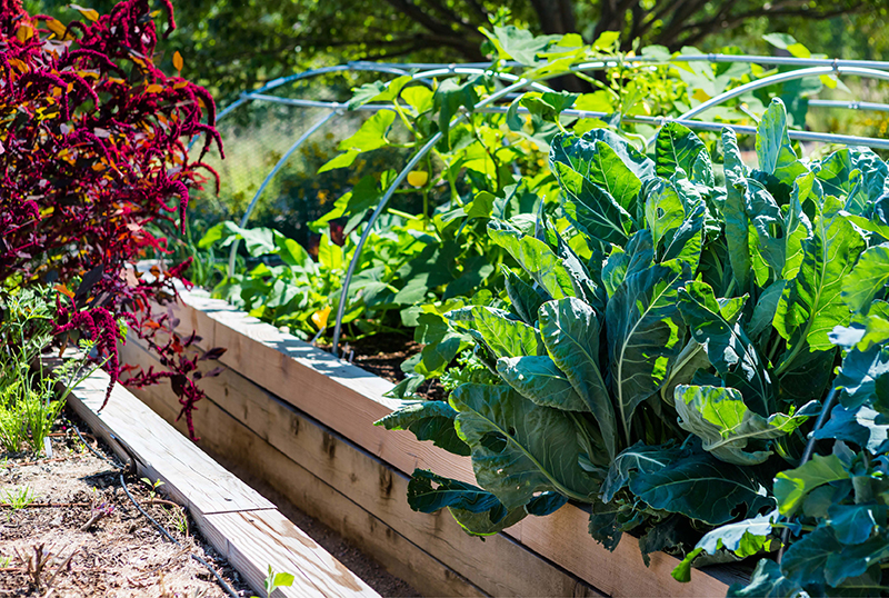 The-Rise-Of-The-Community-Garden