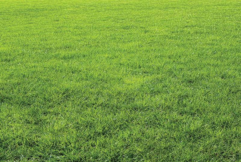 Types-Of-Grass-And-How-To-Choose-One-For-Your-Lawn