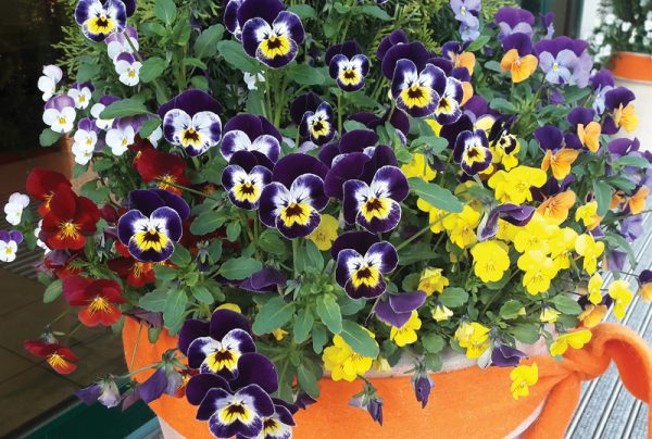 What-Are-The-Easiest-Edible-Flowers-To-Grow_