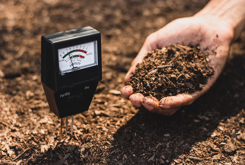 What-Is-Soil-pH-And-Why-It-Matters