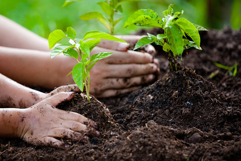 What-to-plant-in-spring-to-keep-your-garden-happy
