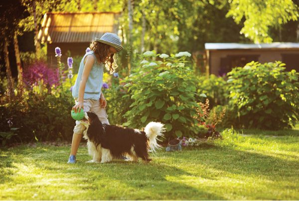 Where-To-Find-A-Pet-Friendly-Weed-Killer