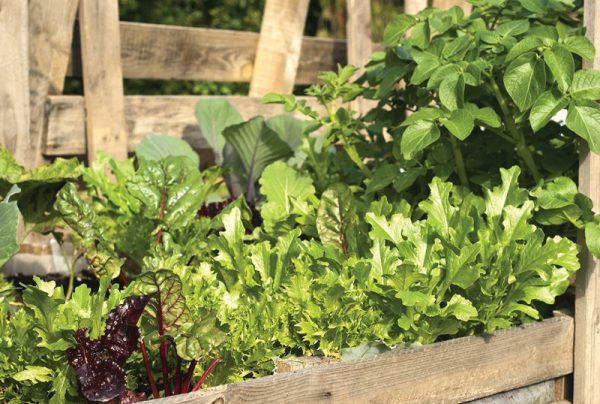 Why-Australia-Has-Embraced-Bioweed