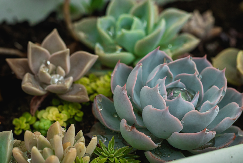 Your-Guide-To-Growing-Succulents3