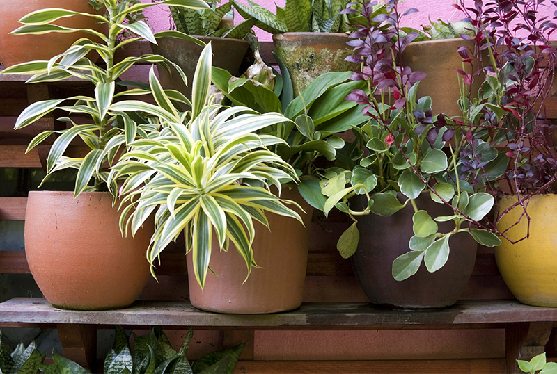 Your-Guide-To-Making-Potting-Mix