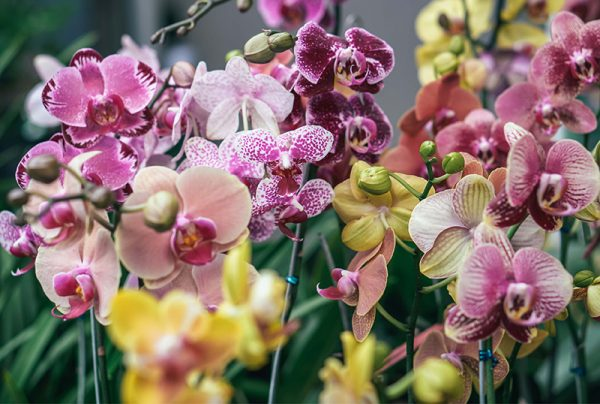 Your-Guide-To-Planting-Orchids