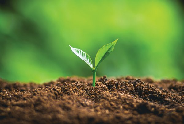 Your-Guide-To-Understanding-Soil-Bacteria