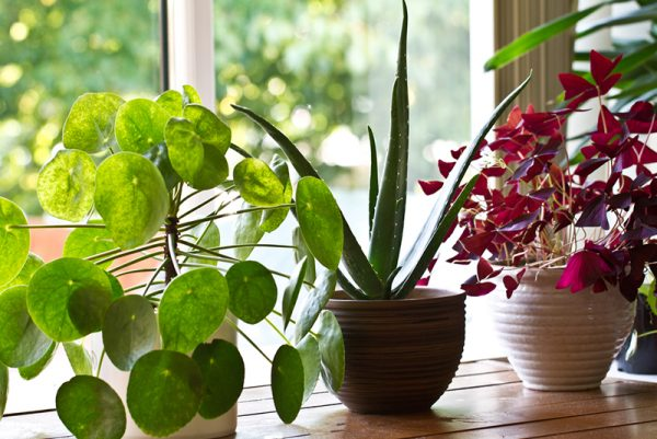 how-to-treat-indoor-plants-website
