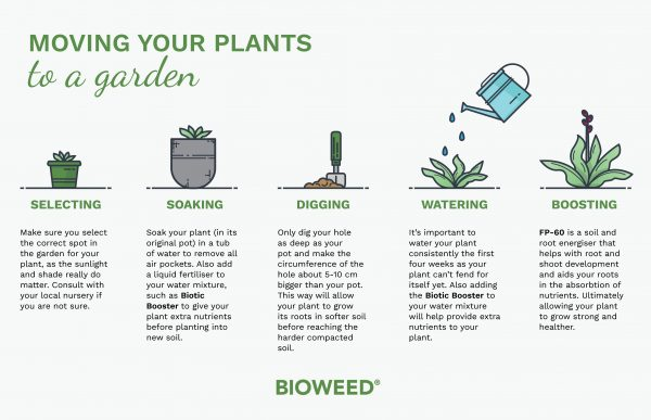 moving-your-plant-to-your-garden